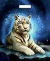 Звёздный тигр